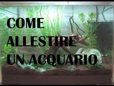 In my YOUTUBE Channel you can see my  AQUARIUM !!! acquario d'acqua dolce