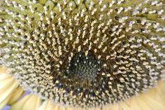 Garden flowers - Extreme closeup - 212
