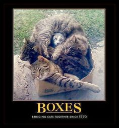 Boxes bringing cats together since 1870
