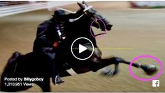 """President of the United States: Mr President, Please Publish Federal Rule Save""""The Horses"""" From """"Big Lick"""" Animal Cruelty Tennessee Walking Horse, University Of Mississippi, Mr President, Baby Horses, Majestic Horse, Gulf Of Mexico, Asheville Nc, Animal Cruelty, Show Horses"""
