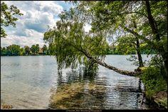 Straussee (Juni 2014) 2 - Die Birke am Wasser #Strausberg #Straussee #Deutschland #Germany #biancabuergerphotography #igersgermany #IG_Deutschland  #ig_germany #shootcamp #shootcamp_ig #canon #canondeutschland #EOS70D #pickmotion #diewocheaufinstagram #AOV5k #lake #See #landscape #Landschaft #Birke #tree #Baum
