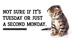 funny tuesday memes, Not sure if its Tuesday or just a second Monday. Happy Tuesday Meme, Happy Tuesday Morning, Tuesday Motivation Quotes, Funny Happy, Daily Photo, Morning Quotes, Cute Wallpapers, Sayings, Memes