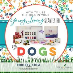 Learn how to use the essential oils from your Young Living Premium Starter Kit on your Dog in this weeks Blog post from Frankincense 4 Ever!  /  Dogs, Puppies, How to use essential oils on your dog, essential oils dogs, dogs and essential oils, Young Living Essential Oils, Premium Starter Kit and Pets, Frankincense 4 Ever, Frankincense4Ever, F4E