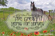 5 Great Herbs for Horses