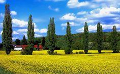 Saarländische Toscana bei Fremersdorf im Landkreis Saarlouis, Germany.