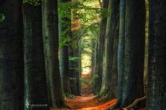 Hoge Veluwe National Park, Netherlands ✯ ωнιмѕу ѕαη∂у