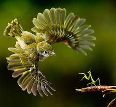 Exotische Vogelwelt 6: Vom Beo bis zum Weißkehltinamu