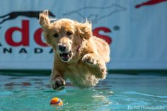 DockDogs World Qualifying Championships at the Redpath Waterfront Festival - Toronto4Kids
