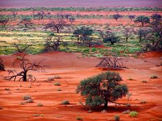 Sossusvlei landscape, Namibia, desertification?