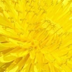 Yellow - @itsyosy- #webstagram