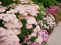 Border with yarrow and pinks - Photo courtesy of Field Outdoor Spaces