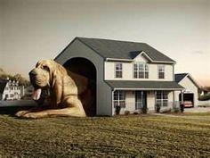 ROFLMAO!! Nice Dog House..