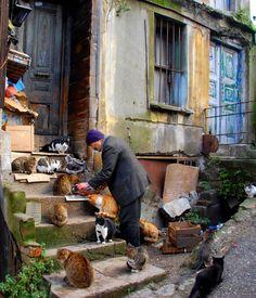 Cat Lover, Istanbul ♥