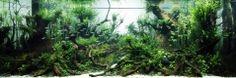 Aquarium Size W242×D90×H100(cm)