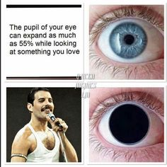 I gathered all memes I could find about Queen and I put them in that book Enjoy MEMES - Freddie Mercury Hello! I gathered all memes I could find about Queen and I put them in that book Enjoy! Queen Freddie Mercury, Freddie Mercury Quotes, Freddie Mercury Tattoo, Queen Band, John Deacon, I Am A Queen, Save The Queen, Great Bands, Cool Bands