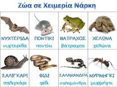 Preschool Education, Preschool Activities, Animals That Hibernate, Crafts For Kids, Arts And Crafts, Greek Language, Greek Alphabet, Animal Crafts, Winter Activities