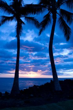 Palm trees Silhouetted during a Hawaiian sunset  by betacam