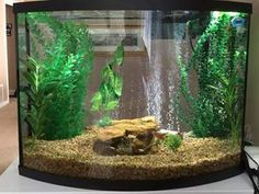 Betta fish tank acuario pinterest peceras acuario y for 38 gallon fish tank