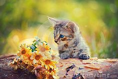 Kitten Looking At Flowers - Download From Over 39 Million High Quality Stock Photos, Images, Vectors. Sign up for FREE today. Image: 46973975