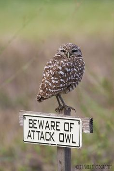 Beware of Attack Owl!