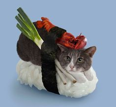 Some cats dressed like food, their expressions alone are worth the scratches