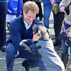 How cool is this, Prince Harry receives a HUGE welcome from Lola, a Staffordshire Bull Terrier, during his visit to New Zealand.