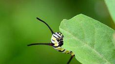 En las últimas estimaciones se calcula que la mayor cantidad de pesticidas que se usan en el mundo se realiza en jardines y huertas particulares por parte de los aficionados. Mucho más que en la ag…