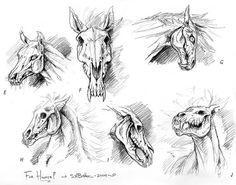 horse skeleton - Szukaj w Google