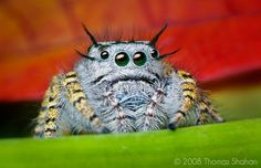 Cute spiders with puppy-dog eyes?! I can't believe it!
