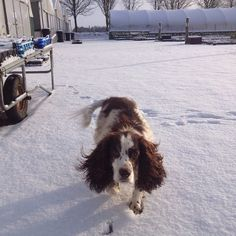 #Snowy day at the nursery #DogsAtWork