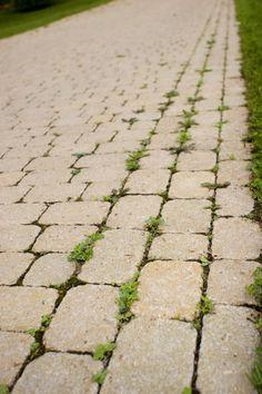 Aidez votre jardin avec du bicarbonate de soude - Trucs et Astuces - Trucs et Bricolages
