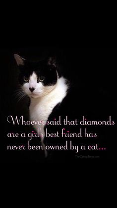 Whoever said diamonds are a girl's best friend has never been owned by a cat.