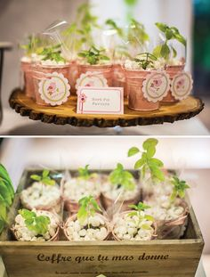 herb-pot-party-favors
