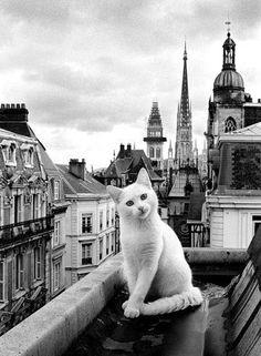Yo soy uno de esos gatos de las fotografías de los tejados de París. Otro nivel.