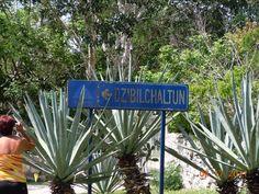 Dzibilchaltun, Mayan Ruins, Mexico