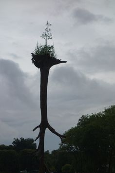 Giuseppe Penone ' les feuilles des racines'.