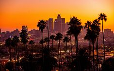 Wallpaper City, Sunset, California, Palm Trees, Los Angeles