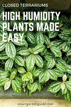 Ensure you pick plants for your closed terrarium that are suited to the growing conditions. These 14 beautiful options will thrive and make having a closed terrarium a real joy. Ensure you pick plants for your closed terrarium that are suited to th Fish Tank Terrarium, Succulent Terrarium, Terrarium Ideas, Indoor Shade Plants, Closed Terrarium Plants, Types Of Moss, Nerve Plant, How To Make Terrariums, Garden Guide