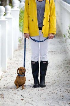 Weenie dog in Seaside, FL