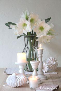 seidenfeins Blog vom schönen Landleben: Winterschönheiten : Amaryllis * winter beauty amaryllis