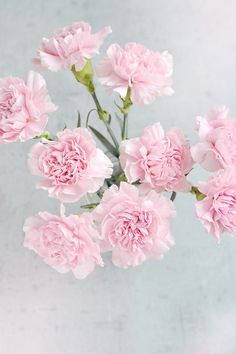 Pink Carnations ~ 10 Most Common Flowers and Their Meanings ~ https://facthacker.com/most-common-flowers-and-their-meanings/