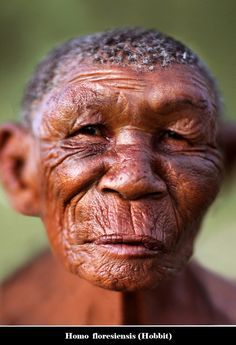 """Homo floresiensis (""""Flores Man"""", nicknamed """"hobbit"""") is a possible species, now extinct, in the genus Homo. Description from pinterest.com. I searched for this on bing.com/images"""