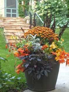 For container gardening ideas, search the internet, the library or a bookstore. The challenge is to come up with a pleasing container garden design. Container Flowers, Container Plants, Container Gardening, Fall Flower Pots, Fall Flowers, Summer Flowers, Purple Flowers, Fall Planters, Garden Planters