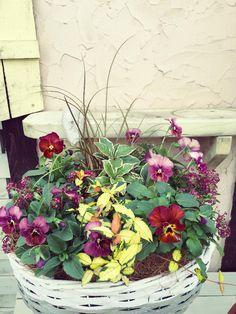 小さな庭の画像 by GreenShopYamajiさん | 小さな庭と秋の寄せ植えフォトコンテスト