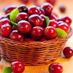 """Arando vermelho - Os arandos (Arando vermelho), também chamados uva-do-monte (em inglês é """"cranberry"""") são umas bagas parecidas com os mirtilos, mas de cor"""
