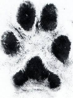Resultado de imagem para black and white paw print realistic