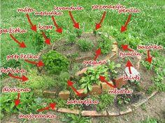 bylinková spirála - Hledat Googlem Growing Plants, Herb Garden, Indoor Plants, Herbalism, Patio, Dyi, Spiral, Brick, How To Make