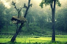 Top tourist attractions in Wayanad