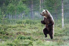 fotos de animales muy divertidas mis gafas de pasta oso andando