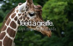 Feed A Giraffe. # Bucket List # Before I Die. The Bucket List, Bucket List Before I Die, Summer Bucket Lists, Life List, Favim, Six Feet Under, Adventure Awaits, So Little Time, Places To Go